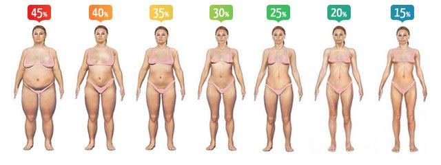 Как узнать процент жира в организме
